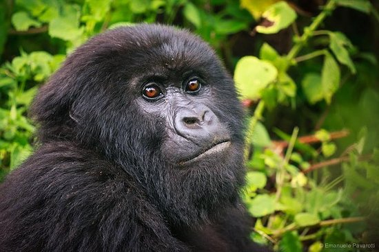 16 Days Ultimate Uganda and Rwanda