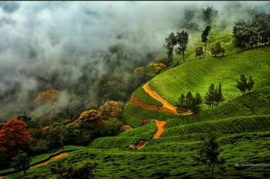 Forfait Lune de Miel au Kerala 3...