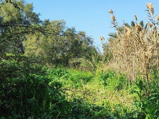 "Rahat, Izrael: בדרך למסעדה נוף על כביש העפר המקביל לנחל ""דבירה"".."