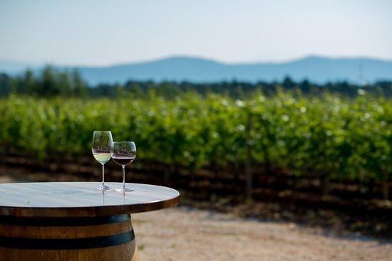 Ljubuski, Bośnia i Hercegowina: Plavac mali, Žilavka and our vineyard !