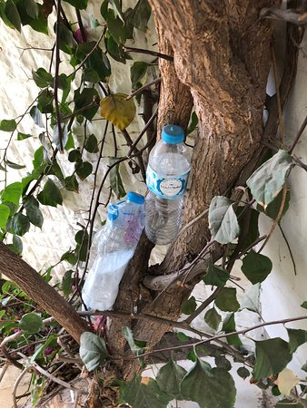 Cleaning products stacked in the tree in used drinking water bottles...