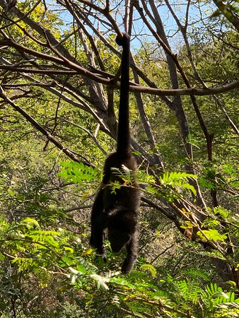 Rio Perdido Hotel & Thermal River: Monkeys 🐒 were great to see so close up