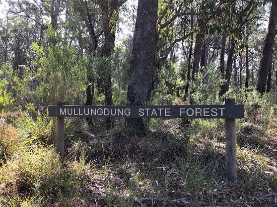 Won Wron, Австралия: Mullungdung State Forest