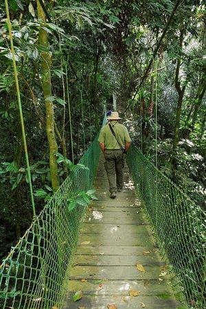 Bridge on path to Kogihabs