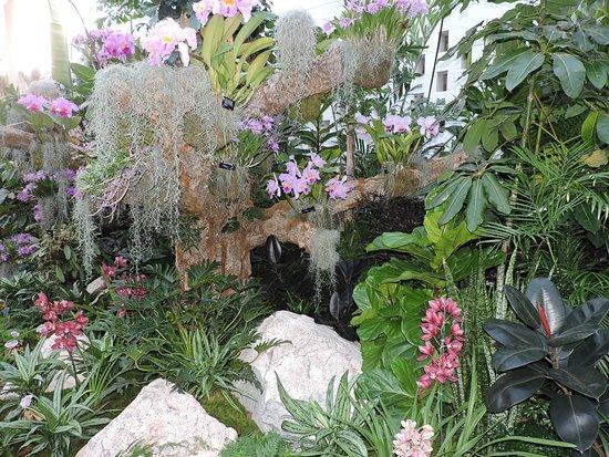 The Orchid Show Picture Of Missouri Botanical Garden Saint