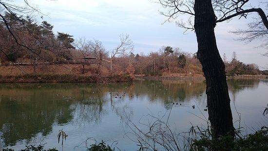 Hatchoko Park