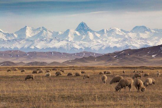 Khan Tengri Peak: Озеро Туз -коль вид на пик Хан -Тенгри   Казахстан