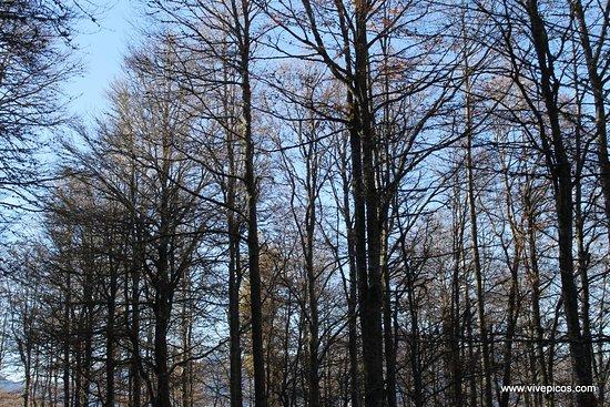 Cain, Spain: Bosque en Picos de Europa.