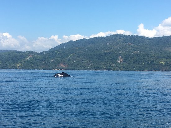 Amazing whale and dolphin tour