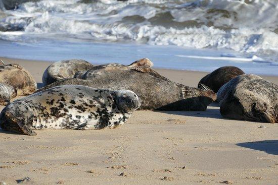 Seals at horsey gap