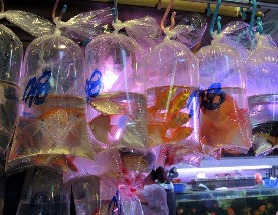 Goldfish Street (Tung Choi Street)
