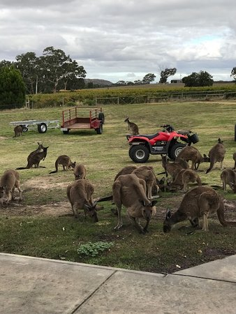 Vineyard tours and a chance to meet the local wild life - Kangaroo's