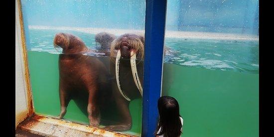Otaru  Aquarium Photo