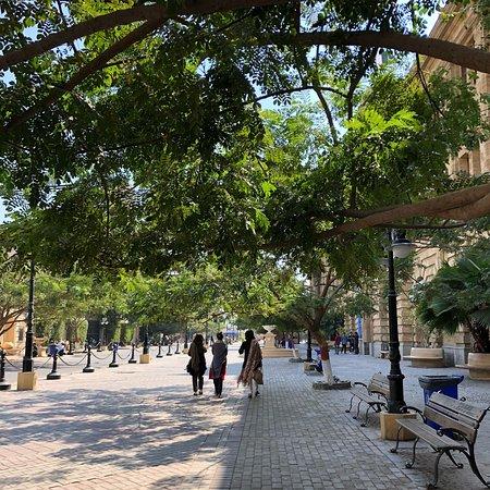 Eduljee Dinshaw Road: Walks down the shaded avenues of the Edulgee Dinshaw Road in the Winter Sun