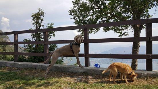 """Civate, Italy: Due pelosi """"posteggiati"""" in attesa dei padroni, uno più apprensivo e l'altro molto meno. Sono stati ripresi al Rifugio Marisa Consiglieri - SEC (1109 m) appena sotto il Monte Cornizzolo (1240 m), si vedono sullo sfondo i laghi della Brianza."""