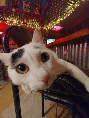 Tia Nita's Cantina: Josiefat the cat