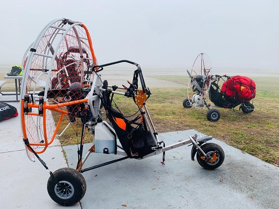 Lake Wales, Floride : What an amazing experience! Watching them wants me to learn how to fly!!!