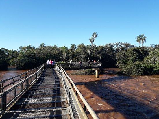 Rio Selva