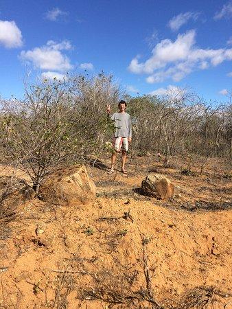 Serra Branca, PB: A vegetação Caatinga apesar do aspecto cinzento, é habitado por milhares de espécies, desde insetos a répteis, árvores verdejantes, aves de todos os tipos etc.. Lugar exuberante.
