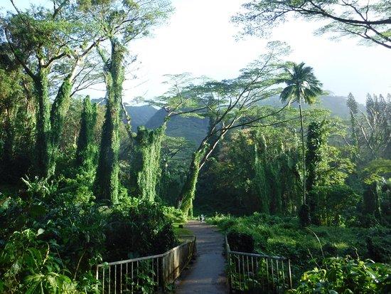 Manoa Falls Trail