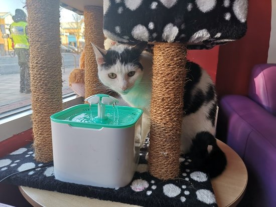 Catisfaction Cat Cafe