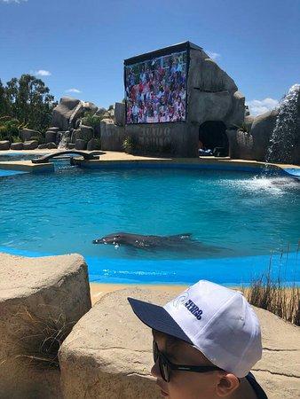 Um lugar extraordinário para se conhecer. Com show de baleia e golfinhos. Mini safari, apresentações ..Chama no whats 51997354106 por dicas.