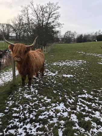The Hairy Coo Edinburgh 2019 All You Need To Know