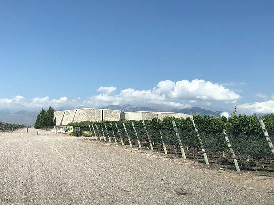 Bodega Zuccardi Valle de Uco: La entrada al viñedo