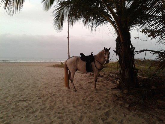 San Juan de los Morros, Venezuela: Shelby el galan de la playa