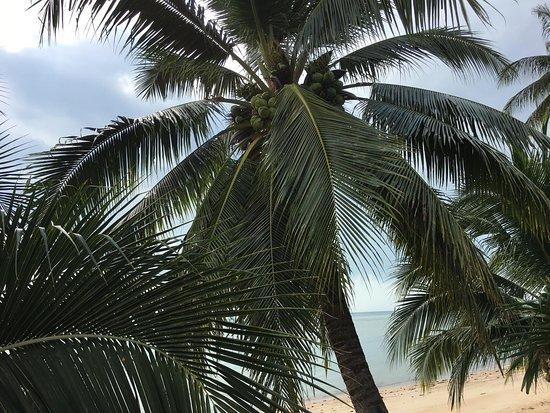 บ้านนอก, ไทย: Kophangan Beach