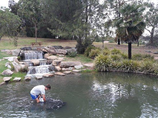 Armidale Bicentennial Arboretum: The middle pond