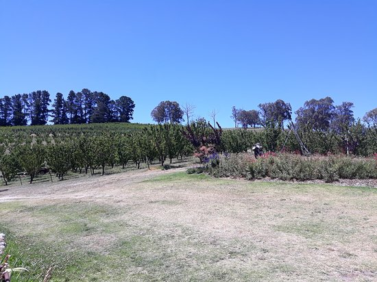 Cherrydale Orchard