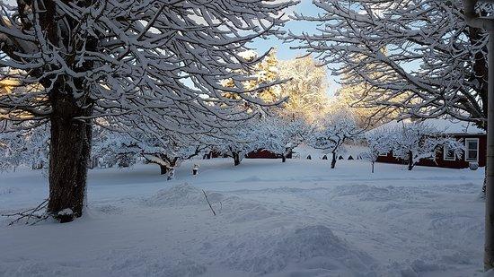 Emmaboda, สวีเดน: udsigt fra vores dobbelværelse om morgenen med nyfalden sne i store mængder.