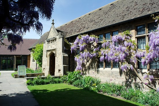 St Ives, UK: The wisteria at The Norris Museum