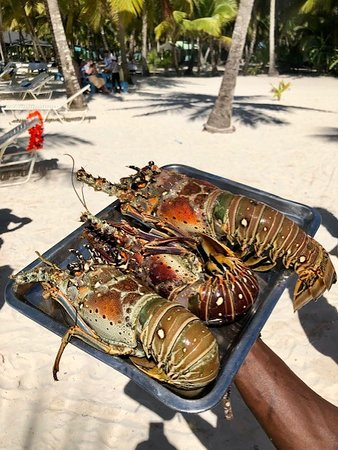 Lobsters yummy (extra cost aprox  30 dollars per pound)
