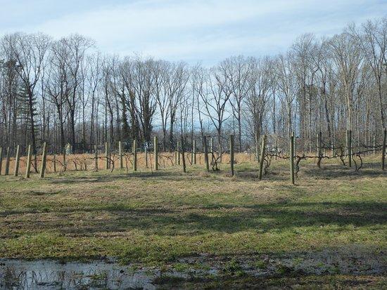 Powhatan, VA: Vines