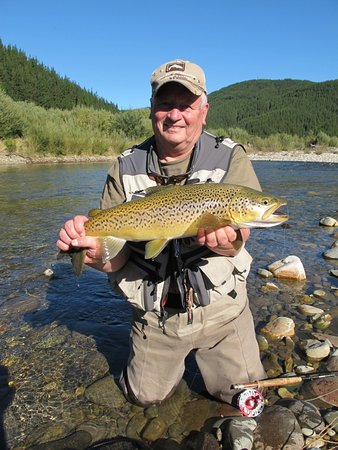 Nelson-Tasman Region, Nova Zelândia: Beautiful color on this brown trout in Nelson area of New  Zealand - caught using my Sage 6 rod and Steelhead colored Abel reel (in photo). Fly fishing with Nelson guide Steve Perry.