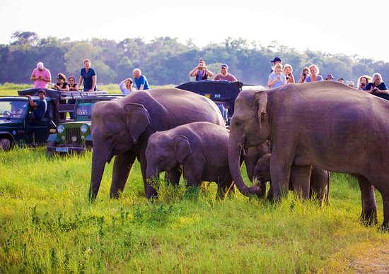 Dambulla, Sri Lanka : If you have watched Disney's ' Monkey Kingdoms ' which was majority shot at Sri Lanka, you may find this landscape familiar. With more than 300 wild elephants seen around the park, you will be directed towards the catchment area of the lake where elephants roam leisurely.