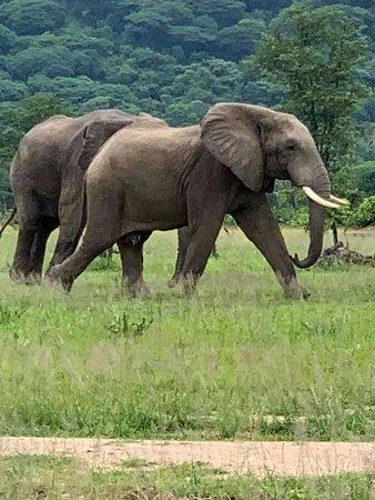 Lodge B: Elephants at Liwonde National Park