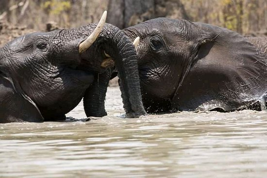 Lodge B: Elephants in Shire River