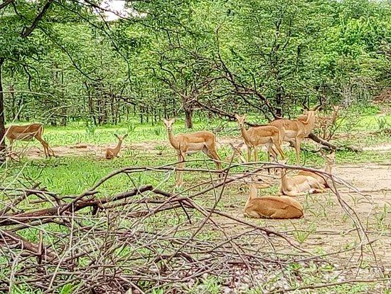 Wildlife in Liwonde National Park
