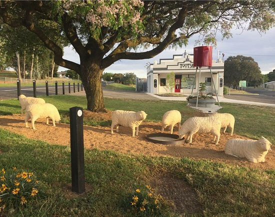 Yass, Австралия: Sheep sculptures out the front of Tootsie