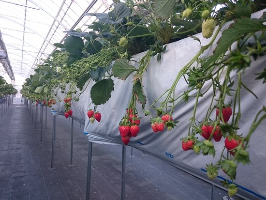 Nagashima Farm