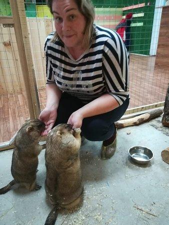 Petting Zoo Rebyata i Zveryata