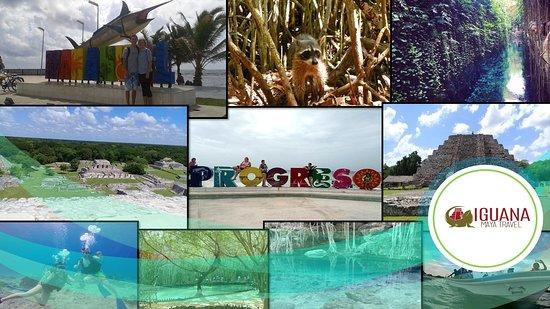 Iguana Maya Travel