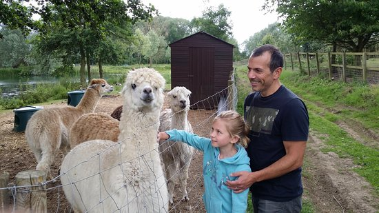 Blackwater Alpacas & Pygmy Goats