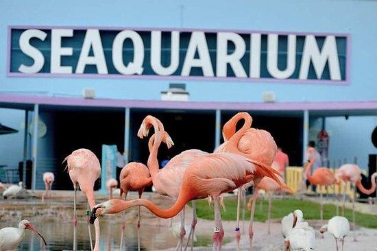 Admission générale du Seaquarium de...