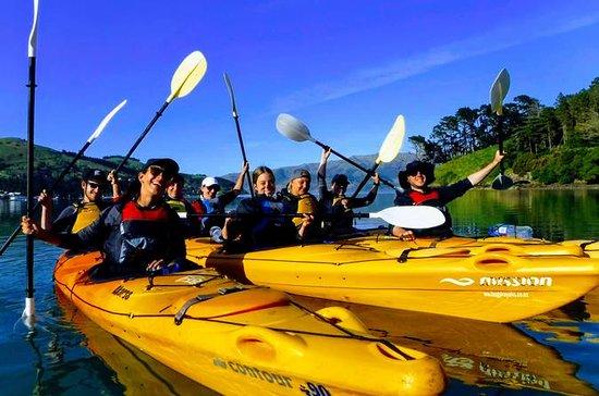 Liten grupp guidad havskayaking med ...