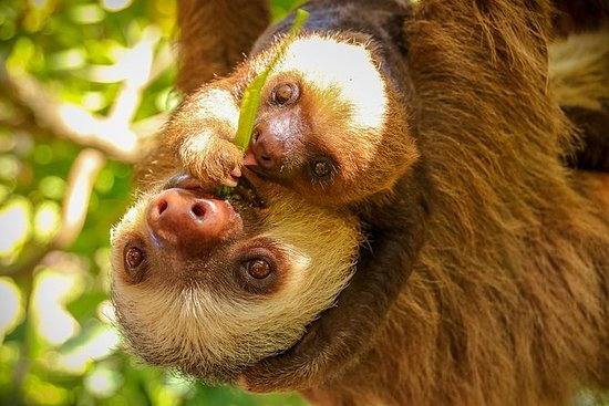 Diamante Eco Adventure Park: Animal...