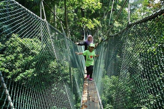 マレーシア森林研究所(FRIM)クアラルンプールの自然トレッキング